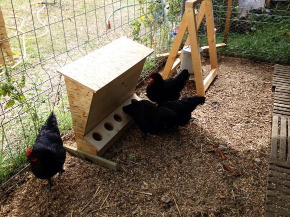 Fabrication d 39 une mangeoire anti gaspillage pour poules for Abreuvoir lapin fait maison