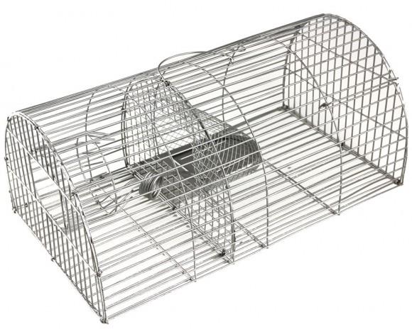 nasse-rat