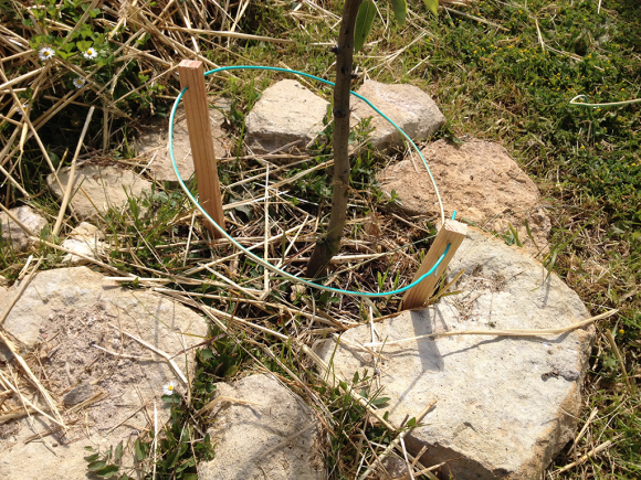 antenne-lakhovsky-fruitier-potager