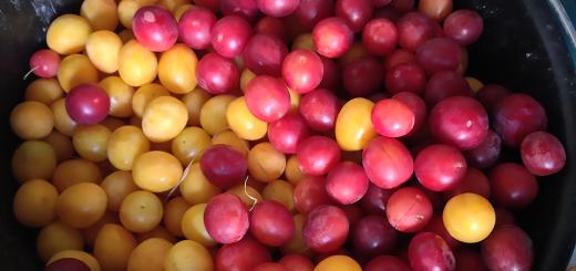 prune-sauvage